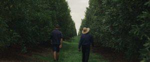 Macadamias-Australia-Still-04